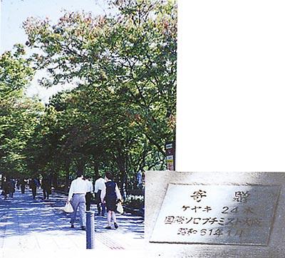 大阪市庁舎ソロプチミストの森