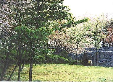 大阪市南港公園八重桜