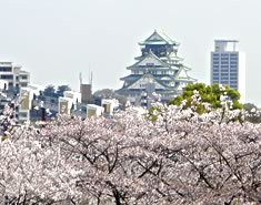 大阪城と桜樹に寄付
